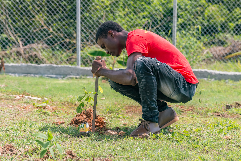 Student plants tree